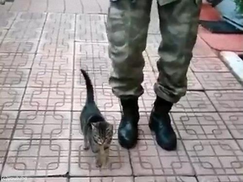 人間と一緒に足踏みする子猫
