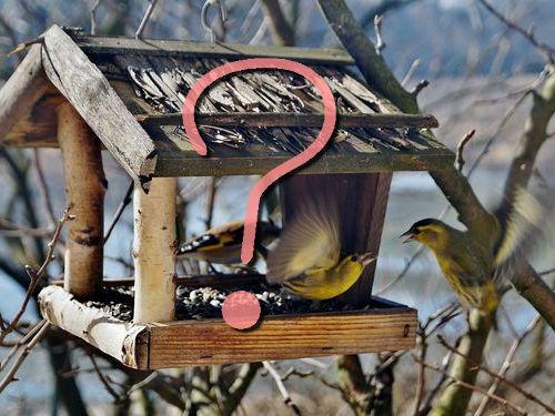 鳥のために巣箱を置いていたつもり00