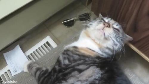 猫、孫の手でカキカキされてご満悦03