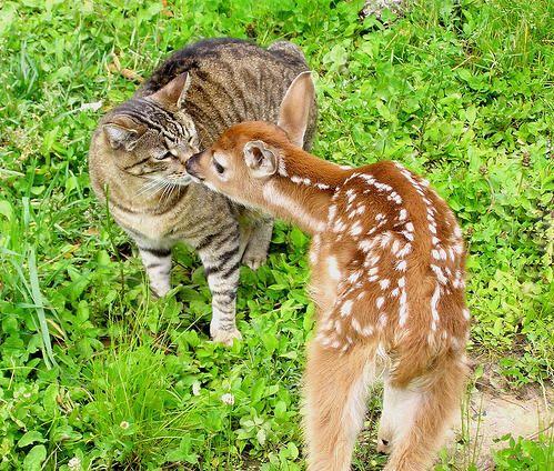 鹿と猫12