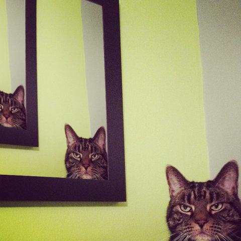 猫の不満顔03