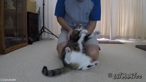 後ろに倒れる猫03