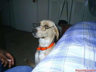 メガネ犬13