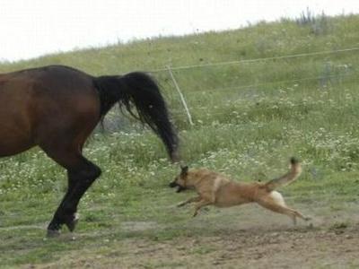 馬と犬TOP