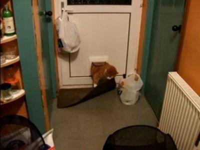 太りすぎの猫