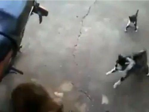 犬と子猫に母猫01