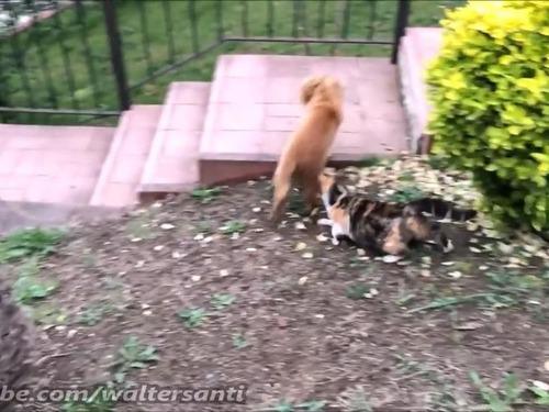 庭に入れさせない猫vs入りたい犬02
