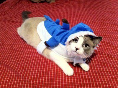サメ猫11