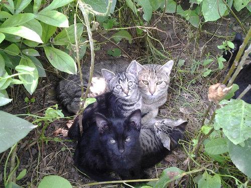 密談する猫たち09
