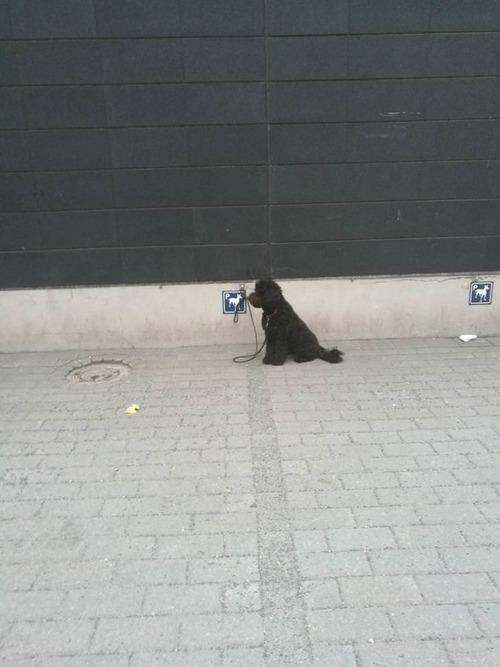 犬用のパーキング01