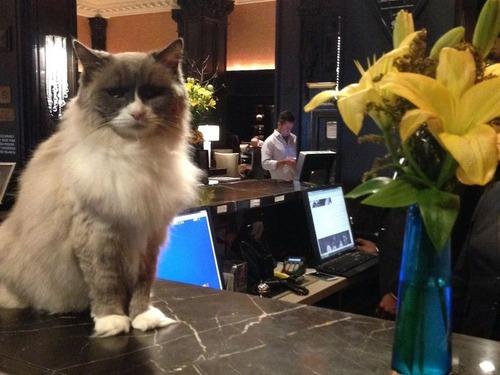 ホテルに勤続7年の猫が引退00