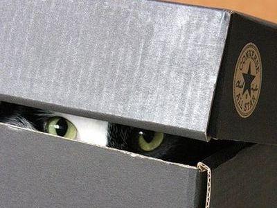 狭い所に入りたがる猫01