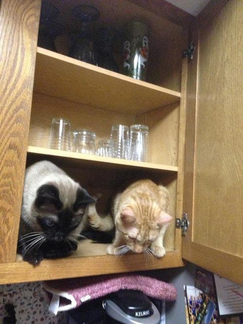 密談する猫たち05