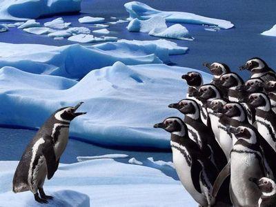 ペンギン整列