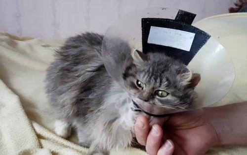 ロシアで凍り付いた猫07