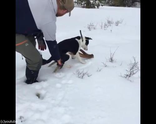 愛犬が雪の中で何か見つけたようだ…すごい執着心01