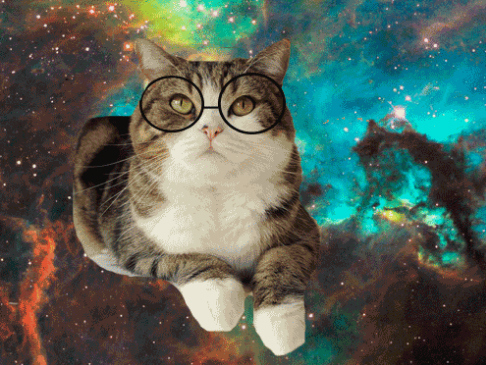 メガネ猫12