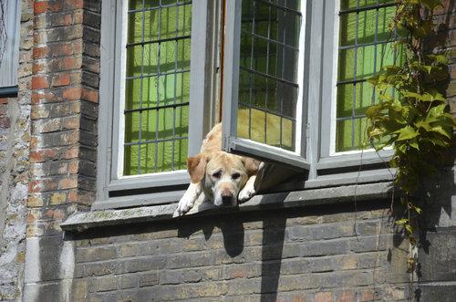幸せそうな犬12