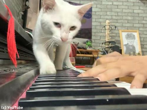 ご主人のピアノを聴く猫00