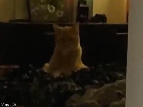 美脚を見せびらかす猫01