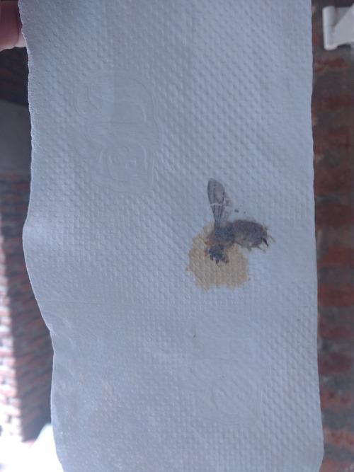 トイレットペーパー製造工場の機械にハチ01
