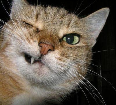 こんな猫はいやだ06