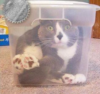 狭い所に入りたがる猫13