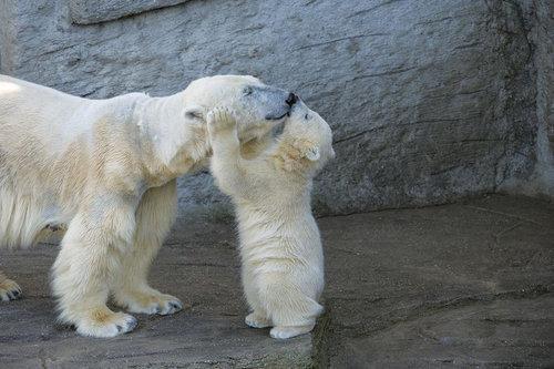 クマの親子05