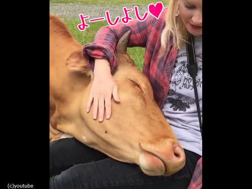 牛とお姉さん00