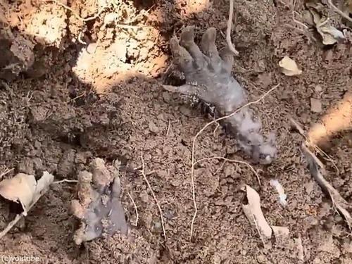 アルマジロが仰向けで埋まっていた00