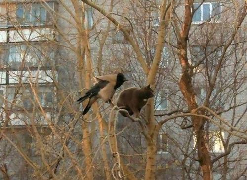 鳥のように木に止まる猫たち04