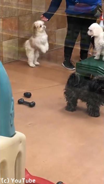 ペットホテルに預けられていた犬、飼い主を見つけた瞬間…01