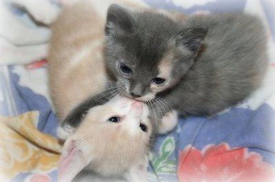 愛し合い猫17