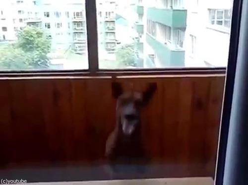 部屋に入りたい犬03