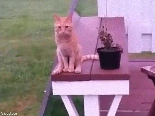 人間のように座る猫01
