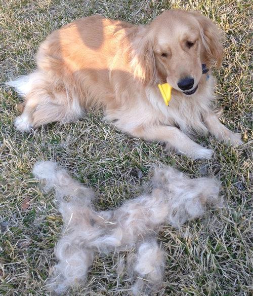 犬の毛変わり03