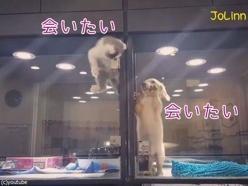 隣の犬に会いに行く猫00