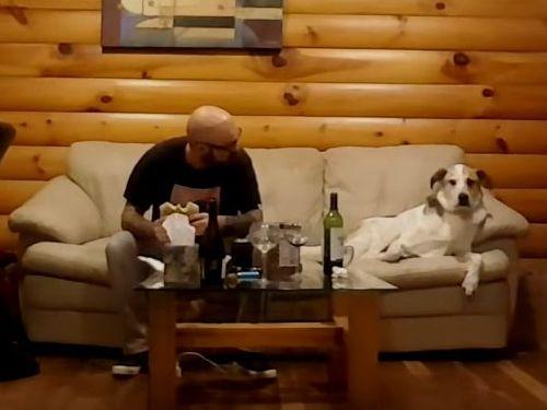 チラ見がばれないようにする犬04