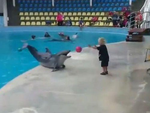 イルカと子供のボール遊び01