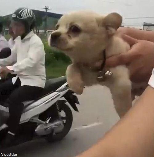 空飛ぶ子犬06