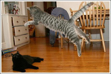 04不意打ちする猫たち
