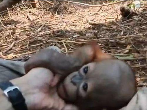 オランウータンの赤ちゃん01