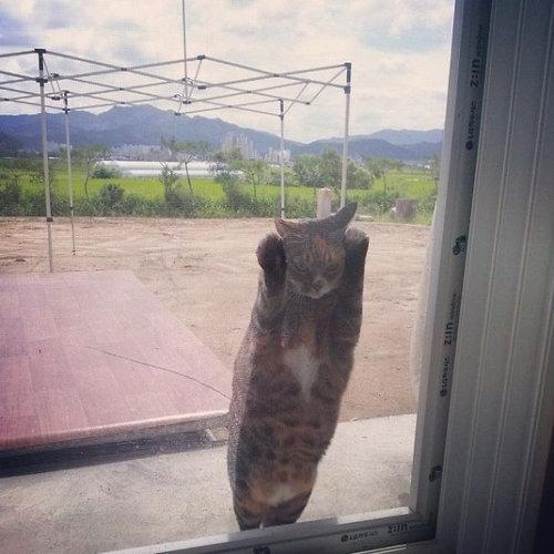 動物「おうちに入れてー!」11