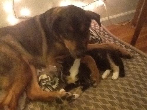 最愛の犬を亡くした猫がとった行動03