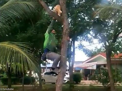 木から降りられない猫02