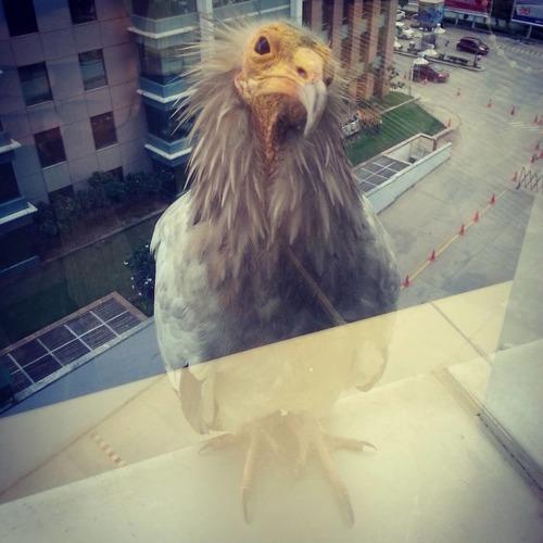 窓にやってきたお客さんたち14