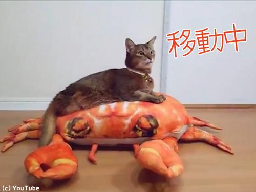 後ろ足のない猫の移動方法が斬新00
