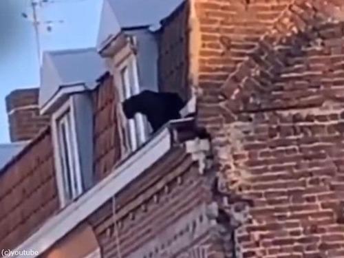黒猫だと思ったらクロヒョウだった00