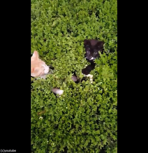 茂みから子猫03