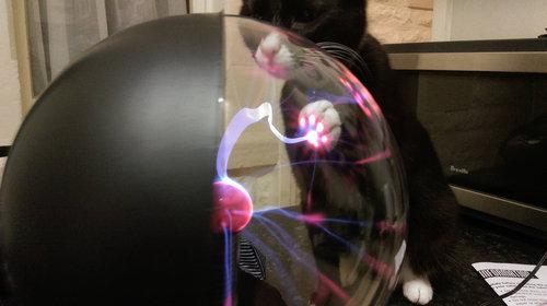 プラズマボールに猫が触れると01